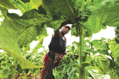 Appraising Nigeria's Agriculture Since 1960