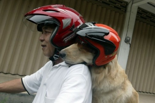 What a joy ride: an Indonesian dog lover Handoko Njotokusumo, a retired businessman and his dog Ace