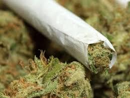 Maijuana