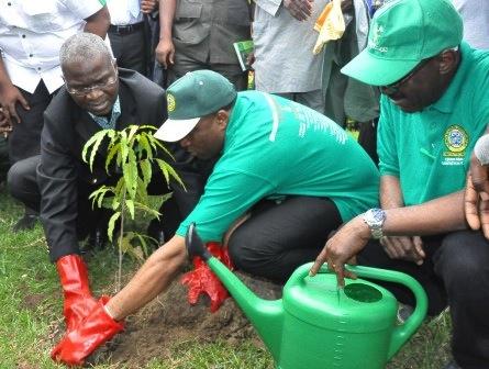Lagos Tree Planting