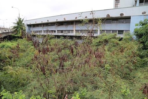 Classrooms taken over by weed.  Photo: Idowu Ogunleye