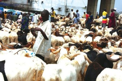 FILE PHOTO: With barely 72 hours to the Muslim festival of Eid-el-Kabir, many Islamic faithful may not be able to slaughter a ram as the prices of the animals in Lagos