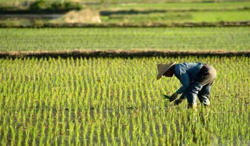 FADAMA's irrigation project