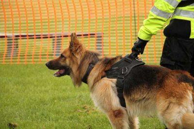 security-dog