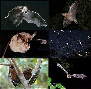 -Bats