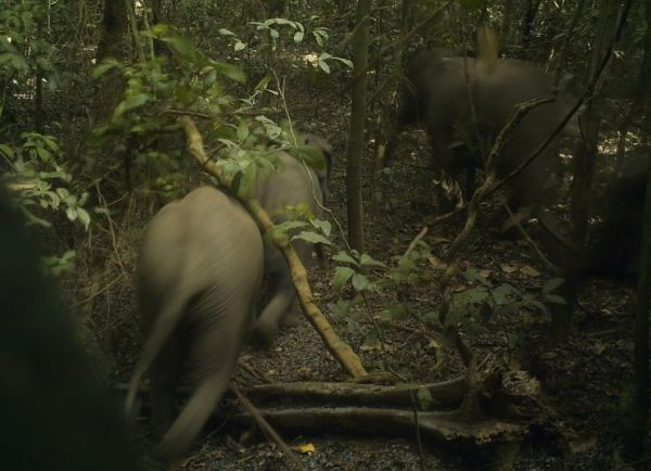 elephants thrive inside Ogun's wild forest