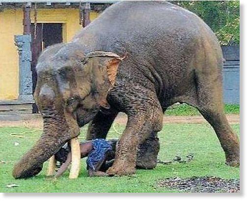 elephantattack