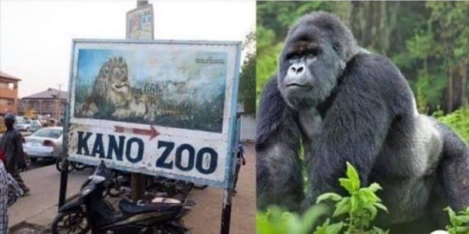 kano zoo