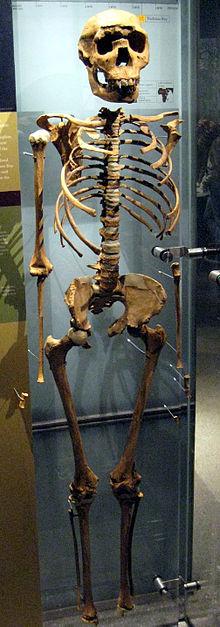 The Turkana Boy fossil