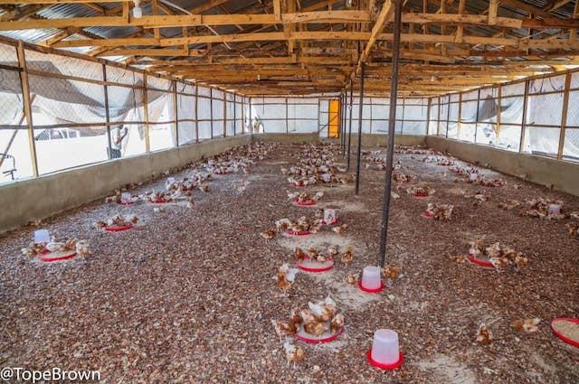 The Gashua bird farm