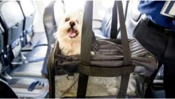 the pet dog on a business class seat traveling from Mumbai to Chennai